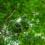 Capes premiará artigos de sustentabilidade e biodiversidade